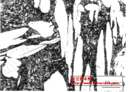 铝青铜的显微组织